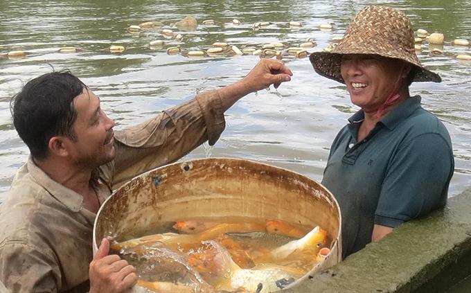 nuôi cá chép