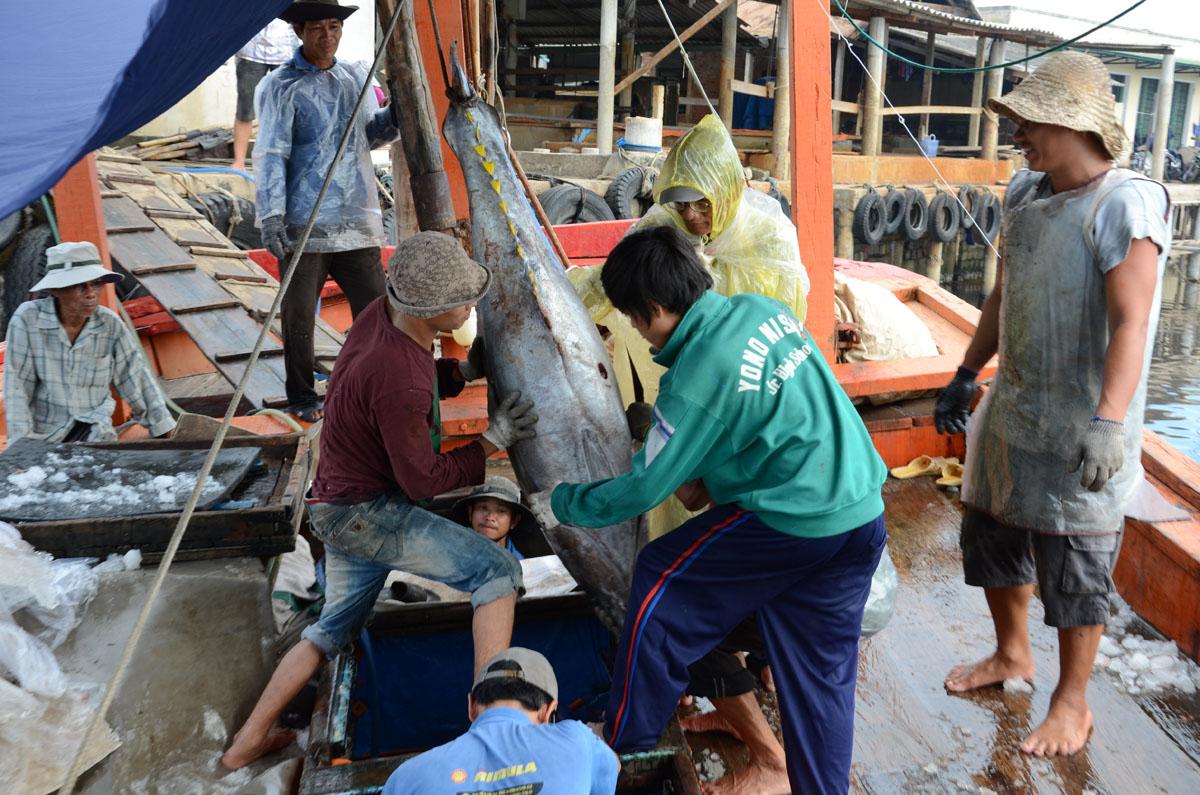 đánh bắt thủy hải đặc sản