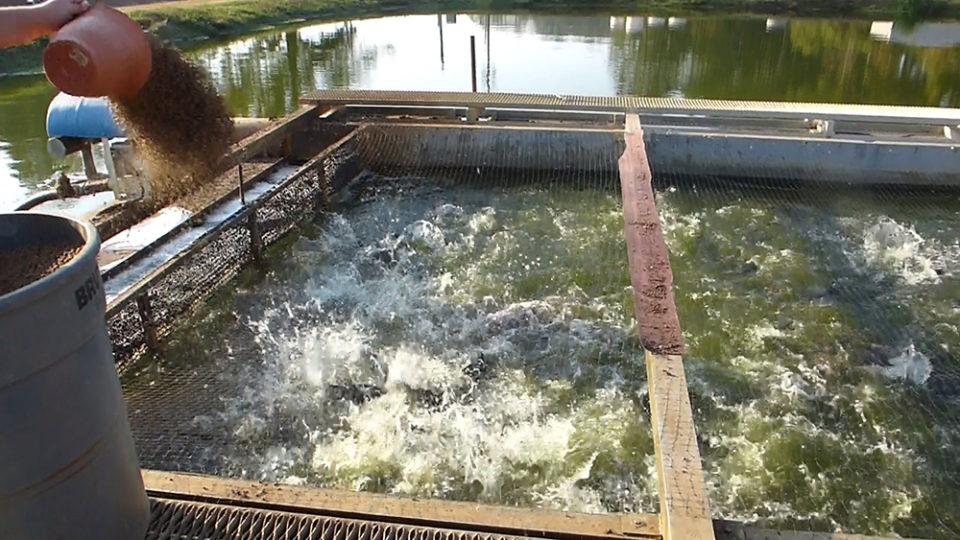 hệ thống nuôi thủy sản nước cháy