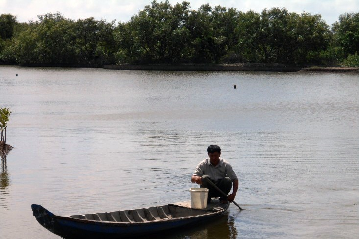 Tra Vinh farmers grow mangrove forests to breed shrimp