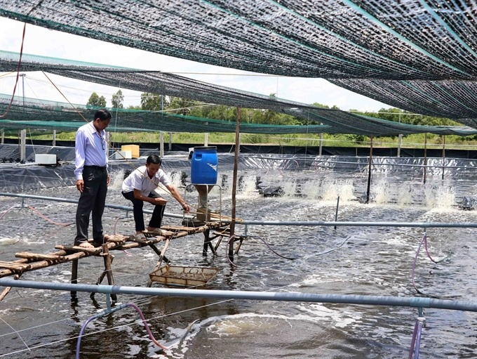Cà Mau takes steps to improve super-intensive shrimp farms