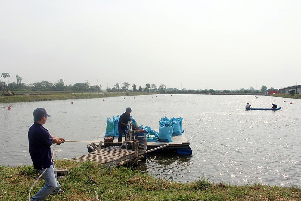 Vietnam power price hike worries pangasius producers