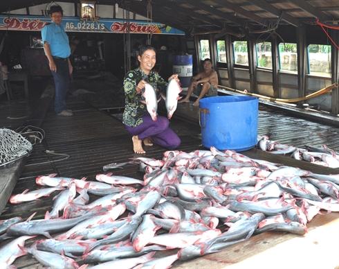 chất lượng cá tra