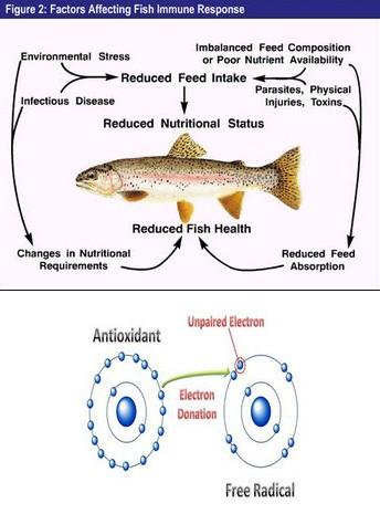 chuyển hóa vitamin trong thức ăn