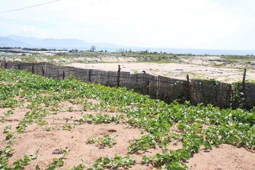 Đất nuôi tôm bị bỏ hoang do dịch bệnh