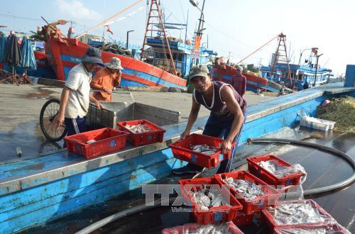 đưa hải sản lên bờ