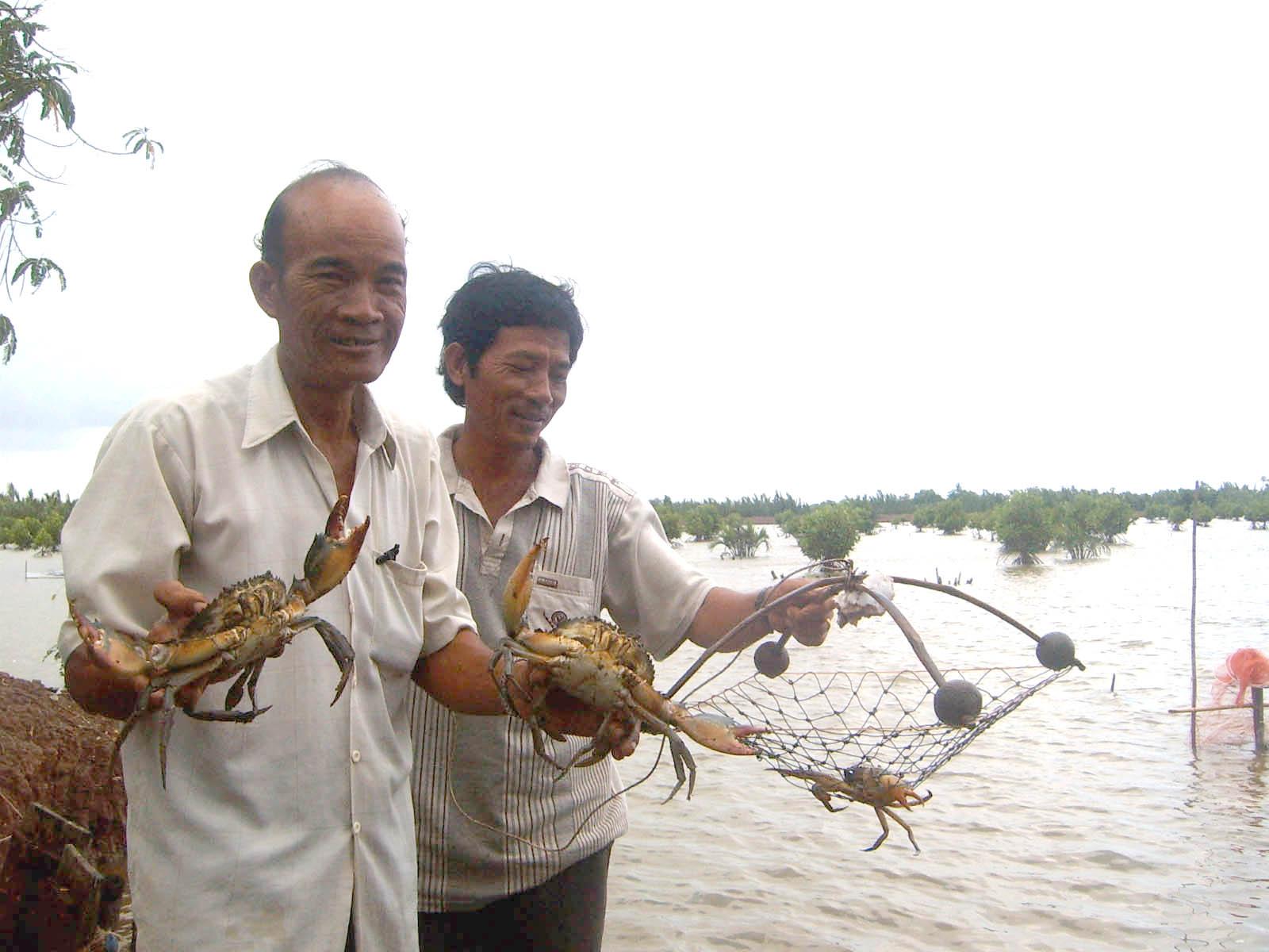 Trà Vinh nhân rộng mô hình nuôi cua biển