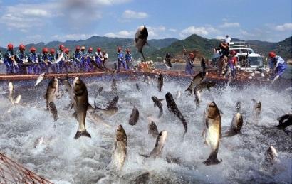 Kết quả hình ảnh cho thủy sản