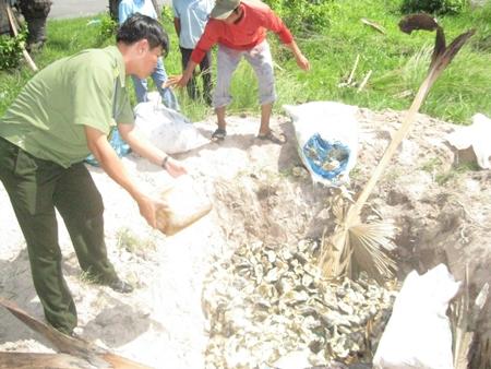 Tiêu hủy khô cá tra ở An Giang.