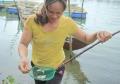Quảng Nam: Hàng ngàn cá chẽm con nuôi lồng bè chết