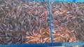 Campuchia nhập khẩu mạnh cá nuôi của ĐBSCL