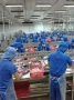 106 tỷ đồng cho giám sát dịch bệnh trên tôm và cá tra