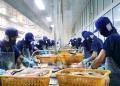 Đề xuất thành lập sàn giao dịch các sản phẩm cá tra Việt Nam