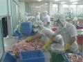 Carrefour ngưng mua cá tra, xuất khẩu vào châu Âu không ảnh hưởng