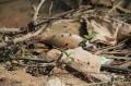 Kết luận nguyên nhân cá chết trên sông Bàn Thạch