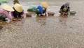 Ngao chết trắng bờ biển Thanh Hóa nghi do chất thải độc hại