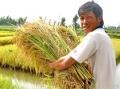 20 năm, tiếng nói từ vùng tôm - lúa