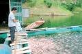 Toàn tỉnh có 2.651 lồng nuôi cá