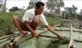 Tăng cường nuôi trồng thủy sản cung ứng kịp thời vào dịp Tết
