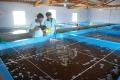 Sản xuất tôm giống - nền móng của ngành tôm hiện đại
