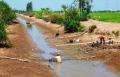 Cà Mau: Nguồn nước nuôi trồng thủy sản bị ô nhiễm nặng