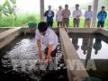 Thái Nguyên tư vấn kỹ thuật cho người nuôi cá nước ngọt