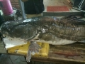 """""""Thủy quái"""" sông Mê Kông nặng 112kg ra Hà Nội"""