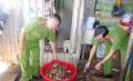 Phát hiện tôm bơm tạp chất chờ xuất sang Trung Quốc