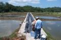 Ảnh hưởng của việc bổ sung phụ gia thức ăn lên kiểm soát dịch bệnh trên tôm tại Ecuador