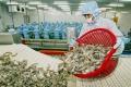 Xuất khẩu tôm vào Mỹ tiếp tục bị áp thuế chống bán phá giá