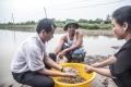 Liên kết tiêu thụ tôm sạch: Sự sống còn của người nuôi tôm và doanh nghiệp