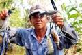 Kiên Giang: Nuôi tôm càng xanh vùng nước lợ đạt hiệu quả kinh tế cao