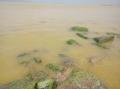 Không còn vệt nước vàng ở vùng cảng Chân Mây