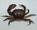 Somanniathelphusa spp.