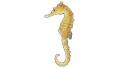 Hippocampus histrix