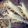 Loài cá nào thích hợp nhất để nuôi ghép với tôm