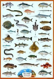 Danh mục các loài cá biển có giá trị kinh tế ở Việt Nam