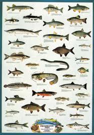 Danh sách các loài cá nước ngọt Việt Nam