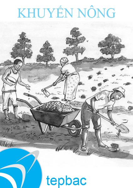 Hướng dẫn quy trình kỹ thuật nuôi cá lóc thâm canh trong ao đất