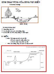 Hệ sinh thái vùng cửa sông ven biển