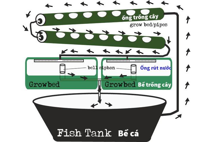hệ thống aquaponics, nuôi cá