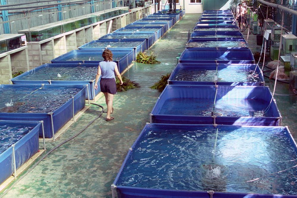 Tích hợp vi tảo trong hệ thống nuôi trồng thủy sản tuần hoàn