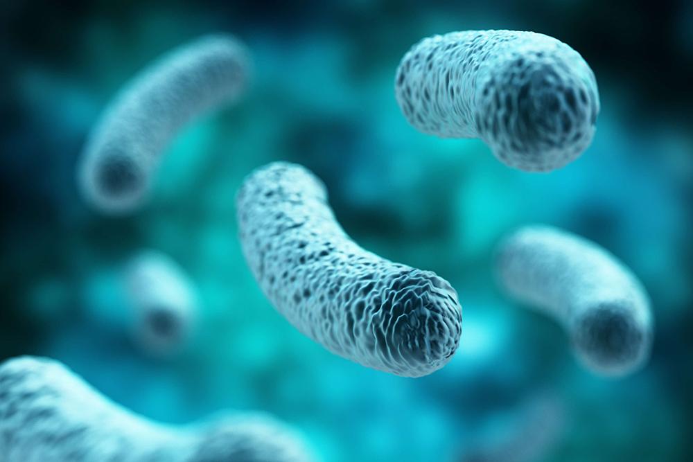Lactobacillus pentosus, probiotics, Lactobacillus pentosus trên tôm, bệnh tôm