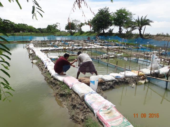 nuôi tôm, nuôi cá, chi phí nuôi tôm cá, ao dinh dưỡng, mô hình nuôi tôm, thức ăn nuôi tôm