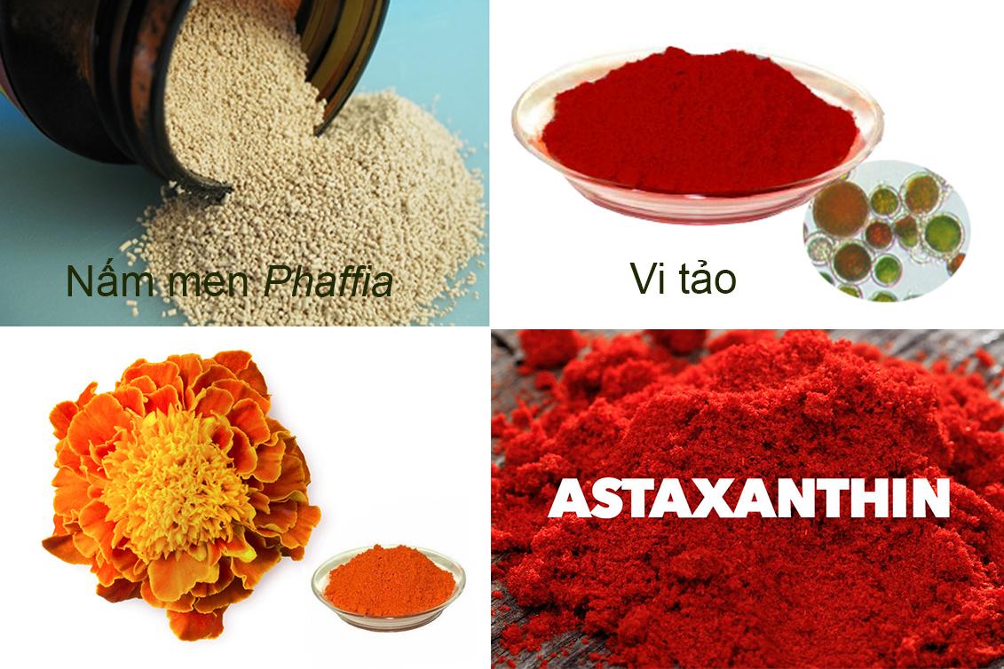 màu sắc tôm, cải thiện màu sắc tôm, nuôi tôm, màu tôm thẻ, màu tôm sú, astaxanthin trên tôm