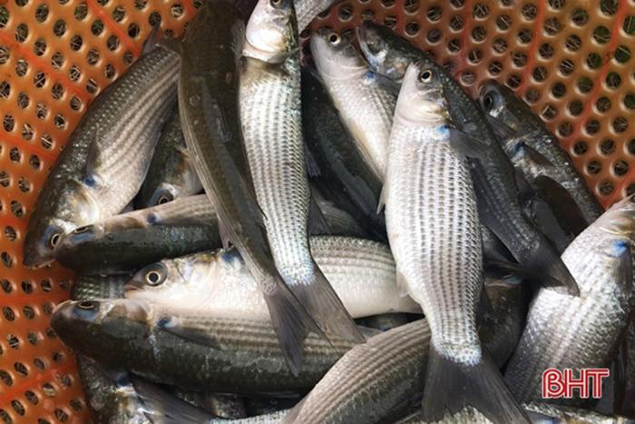 nuôi tôm, nuôi tôm ghép cá, nuôi tôm xen cá, mô hình nuôi tôm, tôm thẻ chân trắng