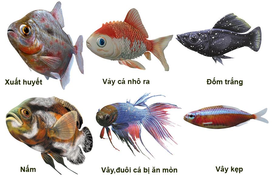 bệnh trên cá, bệnh cá, dấu hiệu cá bệnh, nhận biết cá bệnh, trị bệnh cho cá