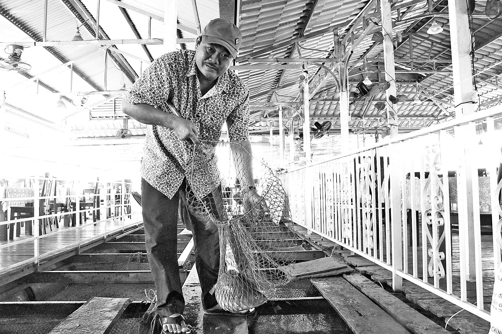 nuôi cá, nuôi cá chép, nuôi cá chép giòn, nuôi cá Đồng Nai, nông dân làm giàu