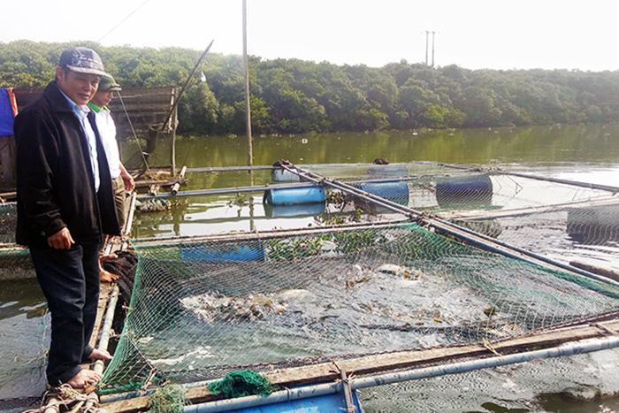 nuôi cá lồng Hà Tĩnh, nuôi cá lồng, nuôi cá Hà Tĩnh, nuôi cá, nuôi cá  chẽm, giá cá