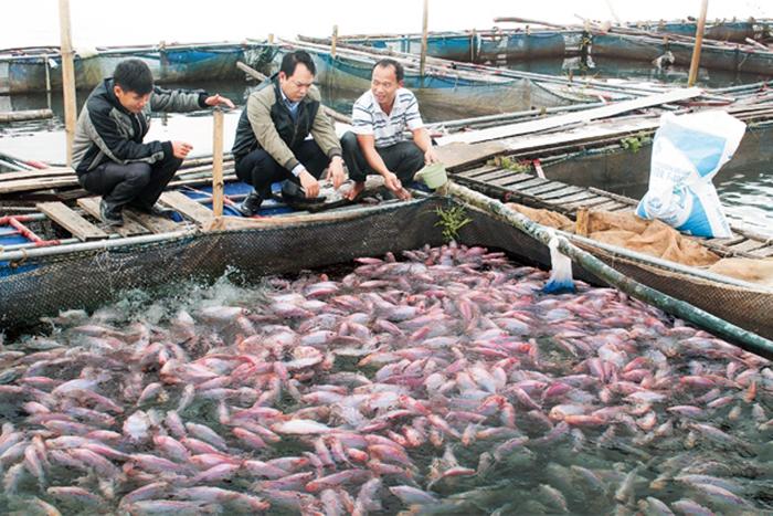 phòng trị bệnh cho cá, trị bệnh cho cá, bệnh trên cá, bệnh cá, bệnh vi khuẩn